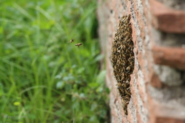 Some bees made themselves at home in one wall's crumbling base. Photo by J.Ludas